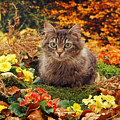 Tabby And Autumn Gold by Warren Photographic