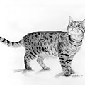 Tabby Cat Looking Up by Phyllis Tarlow