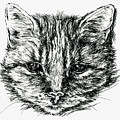 Tabby Cat Portrait In Ink by MM Anderson
