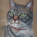 Tabby Cat by Suzan Arizpe