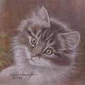 Tabby Kitten by Dorothy Coatsworth