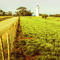 Table Cape Lighthouse by Jorgo Photography - Wall Art Gallery