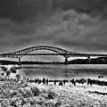 Tacony Palmyra Bridge In B And W by Bill Cannon
