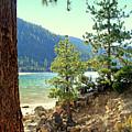 Tahoe Pines by Lynn Bawden