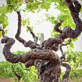 Tai Chi Vine by Travis Elder