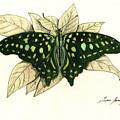 Tailed Jay Butterfly by Juan Bosco