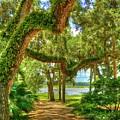 Take A Walk by Debbi Granruth