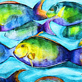 Take Care Of The Fish by Barbara McMahon