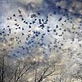 Taken Flight by Jan Amiss Photography