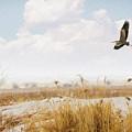 Takeoff by Priscilla Burgers