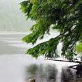 Taking Cover From A Summer Rain Under A Cedar Bough by Sharon Talson