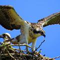 Taking Flight by Dianne Cowen