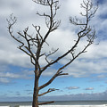 Talbot Stilt Tree #1 by Paul Rebmann