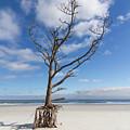 Talbot Stilt Tree #2 by Paul Rebmann