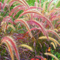 Tall, Colorful, Whispy Grasses In The Sumer Breeze by Barbara Rogers Nature Inspired Art Photography