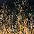 Tall Fall Grasses by Joni Fischenich