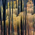 Tall Forest 2 by Lyle Crump