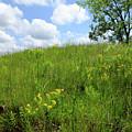 Tall Grass Hillside by Scott Kingery