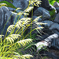 Tall Grass In A Breeze by Lynn Hansen