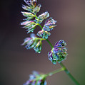 Tall Grass Stem Close-up by Jim Corwin
