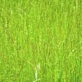 Tall Grassy Meadow by Soni Macy