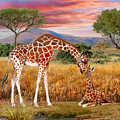 Tall Love From Above by Glenn Holbrook