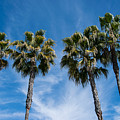 Tall Palms Couples by Robert VanDerWal