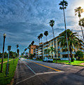 Tall Palms by Marvin Spates