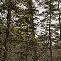 Tall Pines Lower Falls by Heather Applegate
