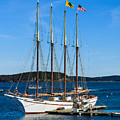 Tall Sailboat In Acadia by Terri Morris