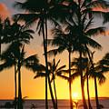 Tall Sunset Palms by Bill Schildge - Printscapes