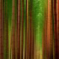Tall Trees by Svetlana Sewell