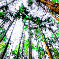 Tall Trees To The Sky by Akin Samuel