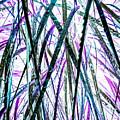 Tall Wet Grass by Heather Joyce Morrill