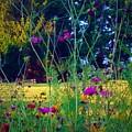 Tall Wisphy Flowers Of Pink by Debra Lynch