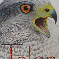 Talon Close Up by Lucien Van Oosten