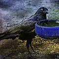 Taming Of The Crow by Georgiana Romanovna