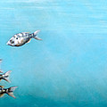 Tampa Bay Tarpon by Joan Garcia