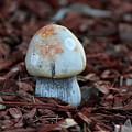 Tangerine Orange Toadstool by Colleen Cornelius