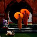 Tangerine Parasols by Stephen Lucas