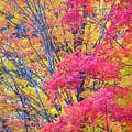 Tangerine Tree by Diane Moore