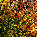 Tangled Branches by Liz Vernand