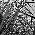 Tangled Grass by Susan Capuano