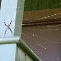 Tangled Web by Annie Babineau