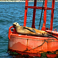Tanning Sea Lion On Buoy by Mariola Bitner