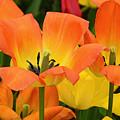 Tantalizing Tulips by Regina Geoghan