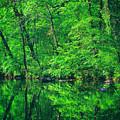 Tar River Reflection by Marvin Averett
