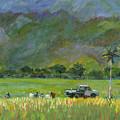 Taro Pickers by Elizabeth Ferris