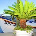Tarpon                 Tarpon Palm                                     by Jost Houk