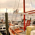 Tarpon Springs Harbor by Ian  MacDonald